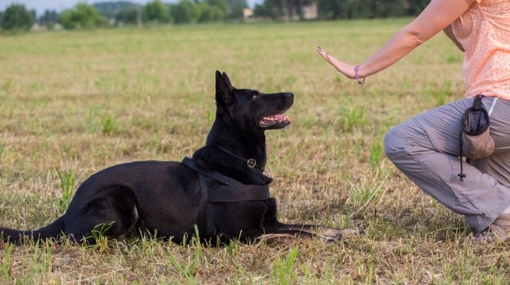 Prepper dog training as part of your security plan