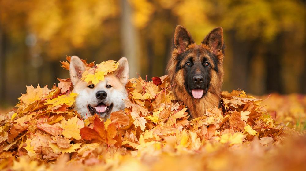 Mind4Survival-Adopting a Dog