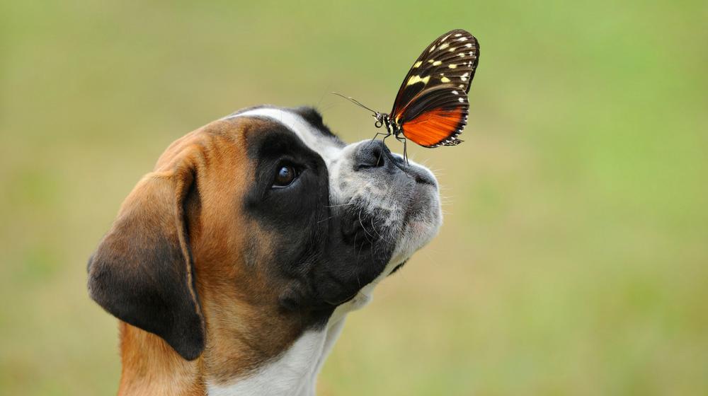Mind4Survival-Dog Training
