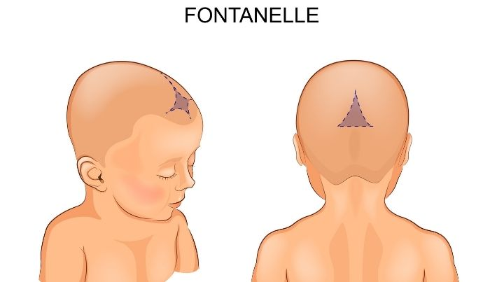 Dehydration facts: This photo describes the location of a babies fontanelle