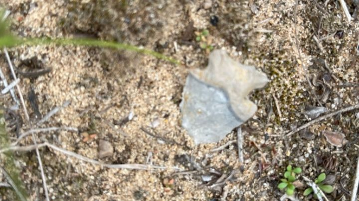 An ancient Native American arrowhead.