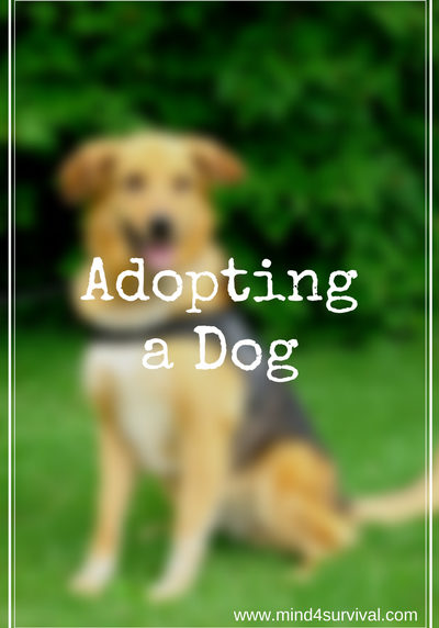 Mind4Survival-Adopting-a-Dog-Project-K9-Hero