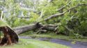 Here is what you should do after a hurricane